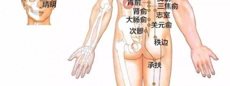 膀胱经穴位