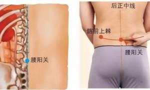 腰阳关的准确位置图和功效作用