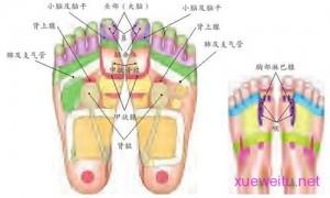 【图解】流行性感冒足浴、足部按摩疗法